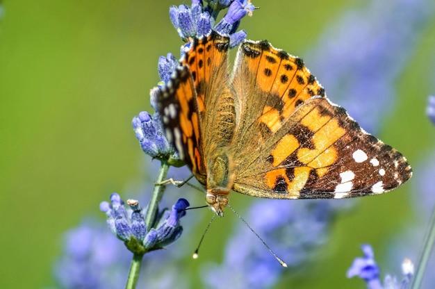 Gros plan d'un beau papillon sur une fleur