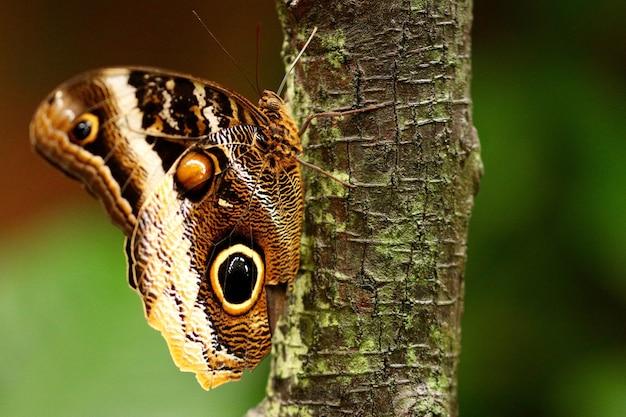 Gros plan d'un beau papillon