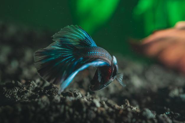 Gros plan d'un beau petit poisson coloré exotique