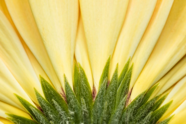 Gros plan de beaux pétales de fleurs