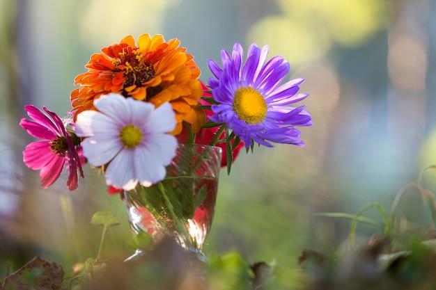 Gros plan, bel, automne, lumineux, champ, fleurs multicolores