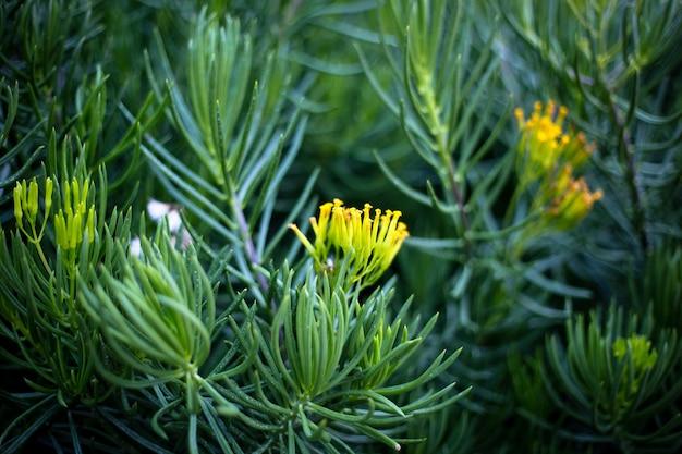 Gros plan sur une belle fleur jaune dans le jardin