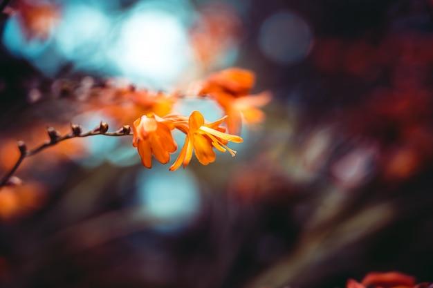 Gros plan d'une belle fleur d'oranger avec effet bokeh