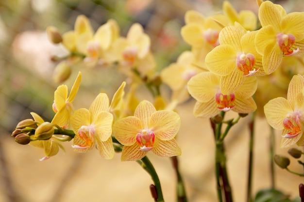Gros plan d'une belle fleur d'orchidée en fleurs dans le jardin.