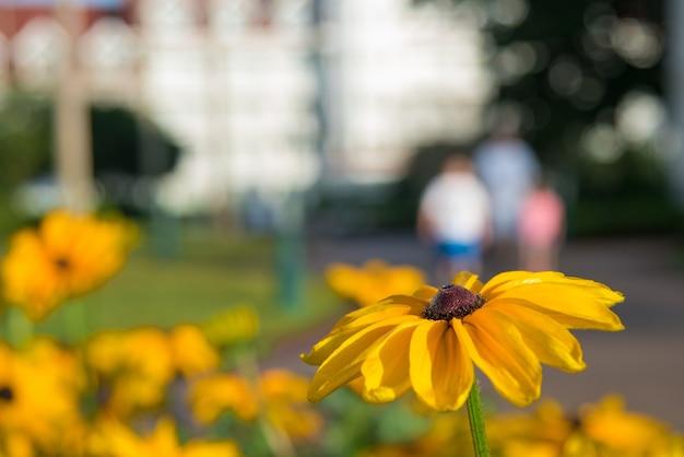 Gros plan d'une belle fleur de susan aux yeux noirs