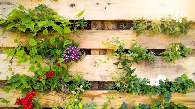 Gros plan sur une belle image de fleurs qui poussent à travers une planche de bois sur un mur décoratif. lit de fleur créatif dans le jardin urbain