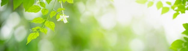 Gros plan de la belle nature vue feuille verte et fleur blanche sur fond de verdure floue dans le jardin avec espace de copie en utilisant comme concept de page de couverture d'arrière-plan.