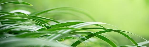 Gros plan de la belle nature vue feuille verte sur fond de verdure floue dans le jardin avec espace de copie en utilisant comme concept de page de couverture d'arrière-plan.