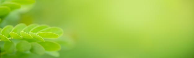 Gros plan de la belle nature vue feuille verte sur fond de verdure floue dans le jardin avec espace copie