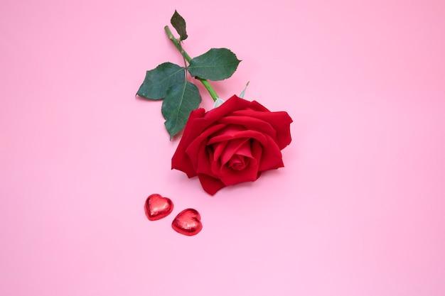 Gros plan d'une belle rose rouge sur fond rose avec deux coeurs de bonbons rouges. valentin, anniversaire, concept de mariage.