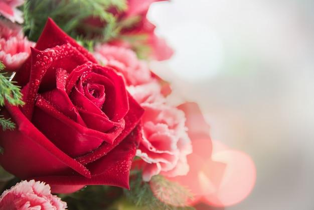 Gros plan d'une belle rose rouge