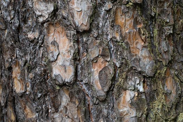 Gros plan sur la belle texture d'écorce d'arbre