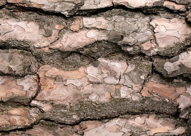 Gros plan sur la belle texture de l'écorce des arbres