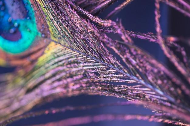 Gros plan belle texture de plume de paon