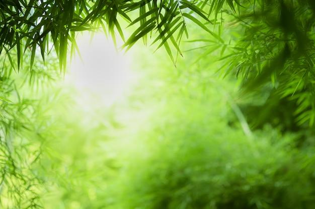 Gros plan belle vue sur la nature feuille de bambou vert sur fond flou de verdure avec la lumière du soleil et l'espace de copie