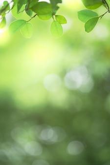 Gros plan belle vue sur la nature feuille verte sur fond flou de verdure avec la lumière du soleil et l'espace de copie. il est utilisé pour le fond d'été de l'écologie naturelle et le concept de papier peint frais.