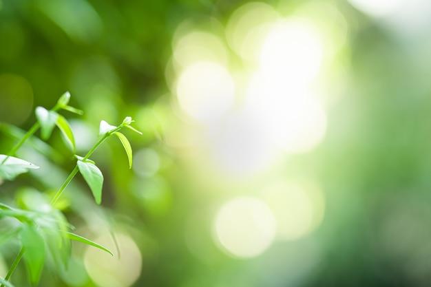 Gros plan belle vue sur la nature des feuilles vertes sur l'arbre de verdure floue