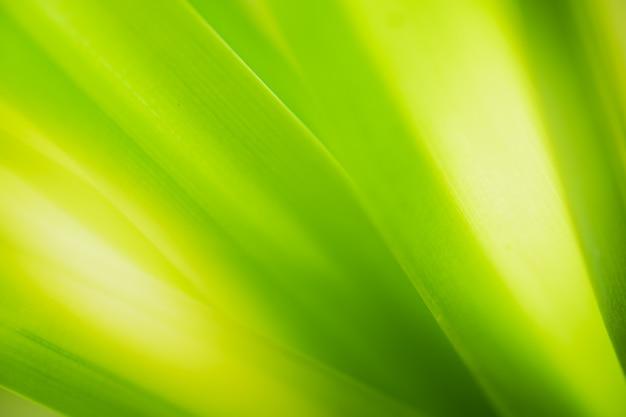 Gros plan belle vue sur la nature des feuilles vertes sur fond d'arbre de verdure floue avec la lumière du soleil dans le parc du jardin public.