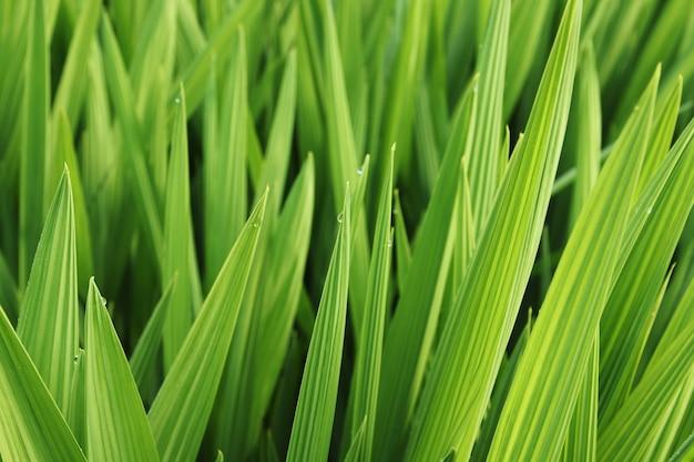 Gros plan de belles feuilles vertes et d'herbe couvertes de rosée du matin