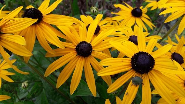 Gros plan de belles fleurs jaunes en été