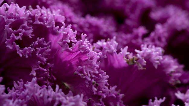 Gros plan de belles fleurs violettes