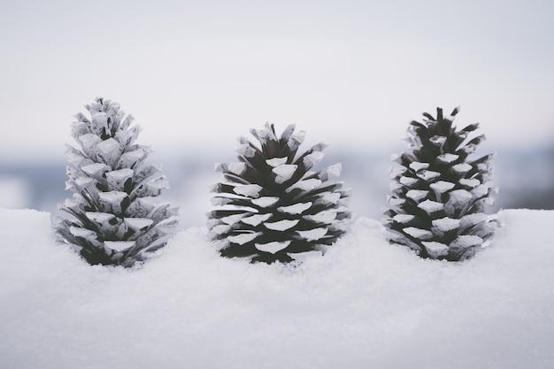 Gros plan de belles pommes de pin blanches dans la neige