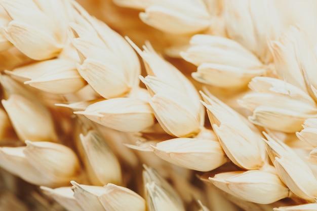 Gros plan de blé doré comme détail.