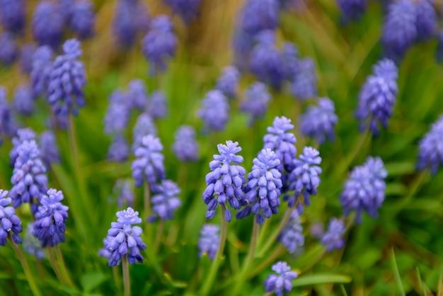 Gros plan, bleu, fleurs, champ