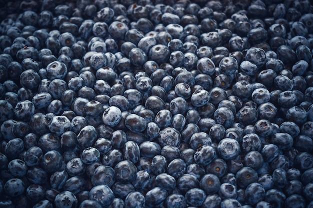 Gros plan de bleuets frais comme toile de fond.