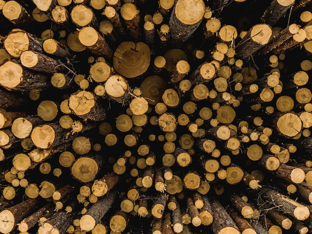 Gros plan de bois de chauffage hachés
