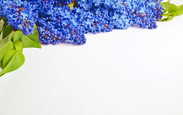 Gros plan sur bouquet de lilas bleu isolé