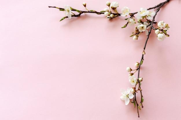 Gros plan d'une branche de cerisier en fleurs