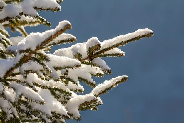 Gros plan d'une branche de pin avec des aiguilles vertes recouvertes de neige fraîche et propre