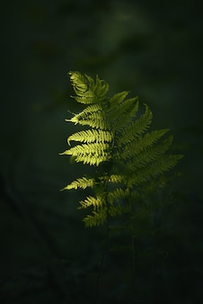 Gros plan d'une branche de plante verte avec un sombre flou