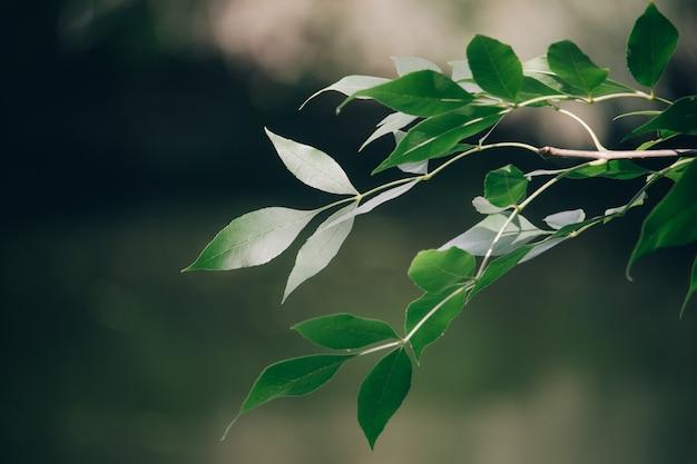 Gros plan d'une branche verte sur un arrière-plan flou de la forêt d'automne, mise au point sélective