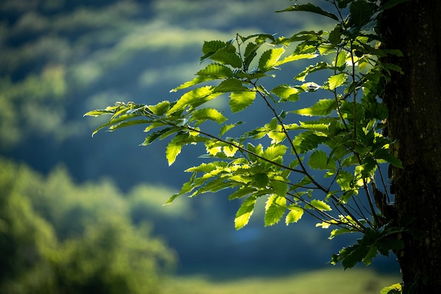 Gros plan de branches d'arbres avec des feuilles vertes avec ciel nuageux en arrière-plan