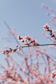 Gros plan des branches d'arbres avec des fleurs épanouies
