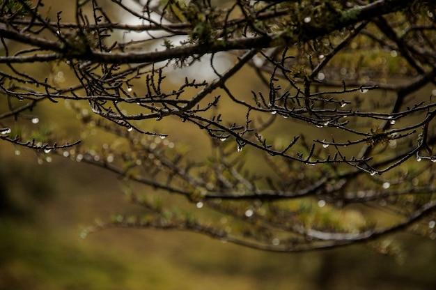 Gros plan, branches, arbres, forêt