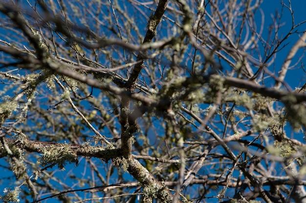 Gros plan des branches d'arbres