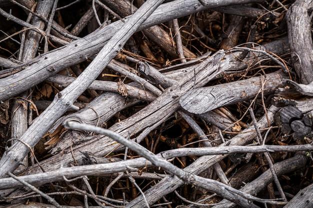 Gros plan des branches sèches grises, texture des branches de l'arbre.