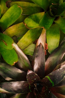 Gros plan, de, bromeliad, plante, dans jardin