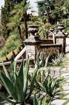 Gros plan des buissons d'agave contre la surface d'une rampe d'escalier vintage