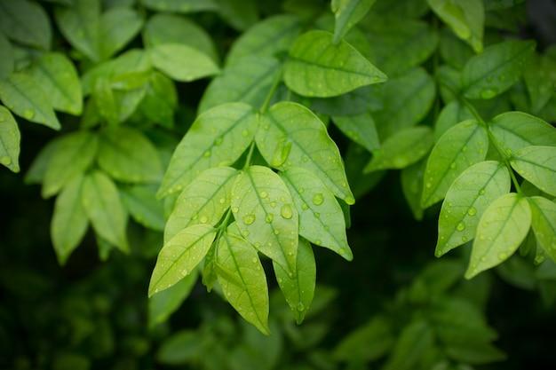 Gros plan, de, buissons verts, fond
