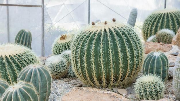 Gros plan de cactus dans un jardin.