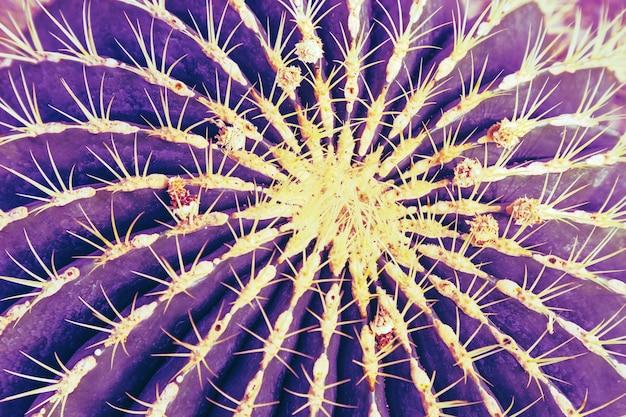 Gros plan de cactus épineux texture de plante succulente fond abstrait tendance bleu violet aux tons