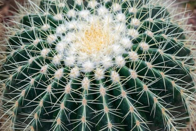 Gros plan de cactus sur galets