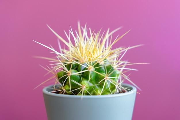 Gros plan de cactus sur un mur coloré