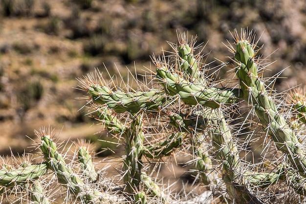 Gros plan d'un cactus avec des pointes et arrière-plan flou