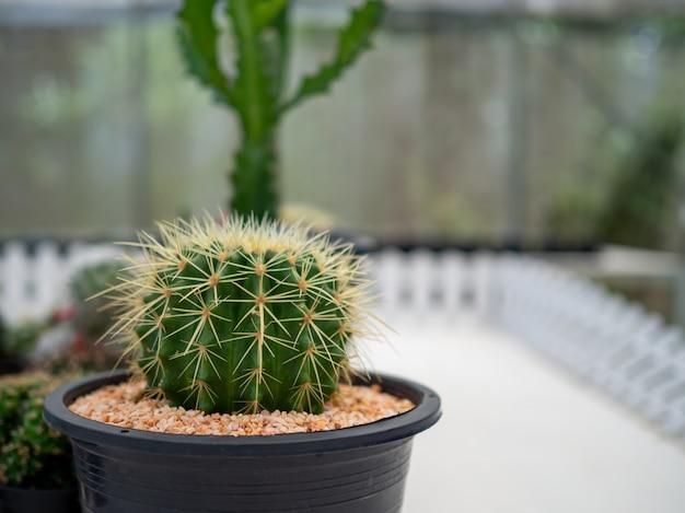 Un gros plan d'un cactus