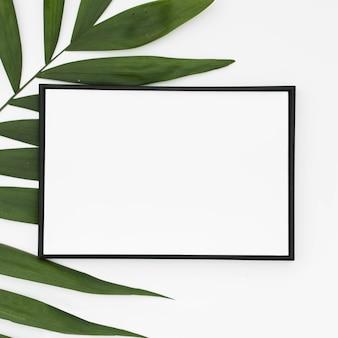 Gros plan d'un cadre vierge blanc avec des feuilles de palmier vert isolés sur fond blanc